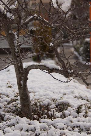 snow2015_02.jpg