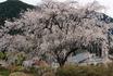 yunoyama160406a.jpg