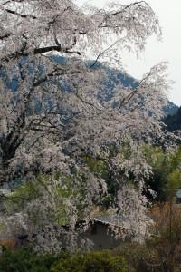 yunoyama160406d